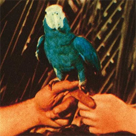 Andrew Bird- Are you serious
