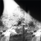 Godspeed You! Black Emperor- Asunder, sweet and other distress